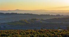 Fruška Gora – Monasteries & wineries