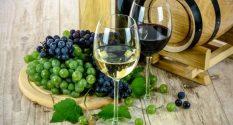 Wine tour – Fruška Gora & Karlovci